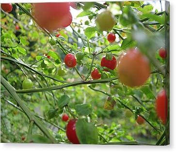 Inside The Red Huckleberry Canvas Print by Kym Backland