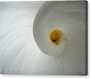 Flowers Canvas Print featuring the photograph Inspiral by Roberto Alamino