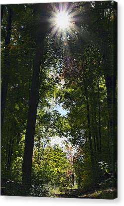 Into The Light Canvas Print by Peter Chilelli