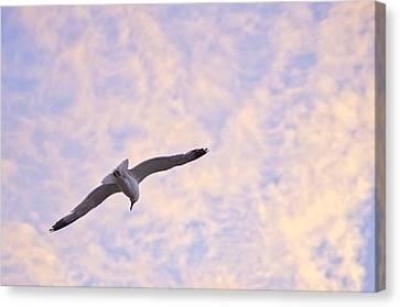 Into The Wind Canvas Print by Priya Ghose