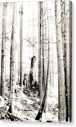 Into The Woods Canvas Print by Kevin Barske