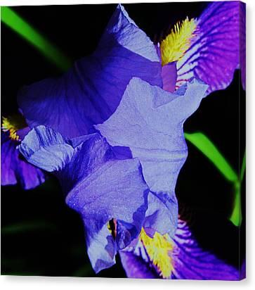 Iris Delight Canvas Print by Todd Sherlock