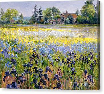 Irises And Two Fir Trees Canvas Print by Timothy Easton