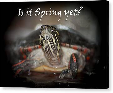 Is It Spring Yet Turtle Canvas Print by LeeAnn McLaneGoetz McLaneGoetzStudioLLCcom