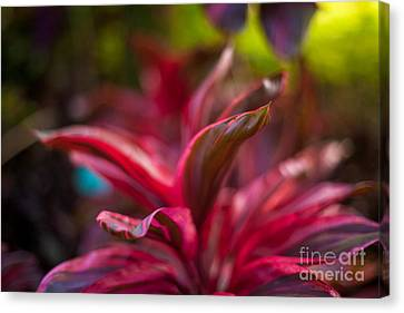 Island Bromeliad Canvas Print by Mike Reid