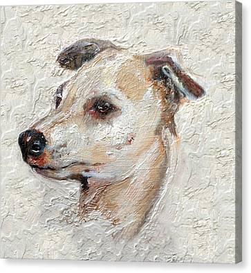 Italian Greyhound Canvas Print by Enzie Shahmiri