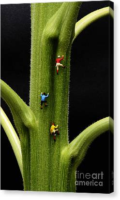 Jack And His Friends Climb The Beanstalk Canvas Print by Bob Christopher