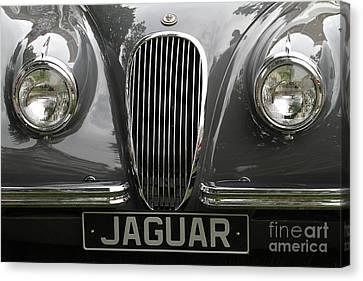 Jaguar Canvas Print by Dennis Hedberg