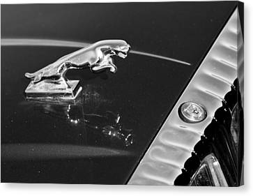Jaguar Hood Ornament In Black And White Canvas Print by James BO  Insogna
