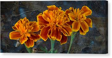 Janet's Marigolds Canvas Print by Lisa Moore