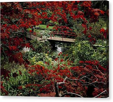 Japanese Garden, Through Acer In Canvas Print by The Irish Image Collection