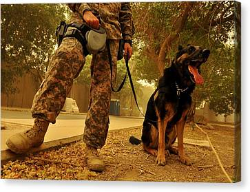 Jaso A Military Working Dog Canvas Print by Everett