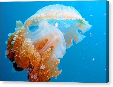 Jellyfish And Small Fish Canvas Print by Takau99