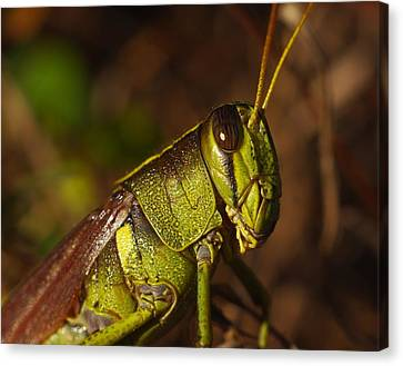 Jiminy Cricket Never Looked This Good Canvas Print by Billy  Griffis Jr