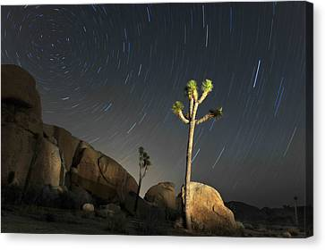 Joshua Tree Star Trails Canvas Print by Dung Ma