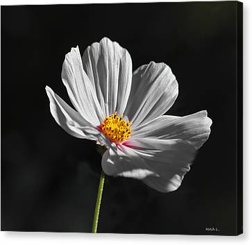 Just A Flower Canvas Print by Mitch Shindelbower
