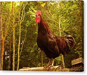 King Of The Barnyard - Rooster Canvas Print by Yvon van der Wijk