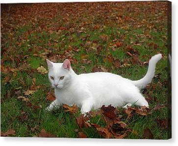 Kitty In The Leaves Canvas Print by Tyra  OBryant