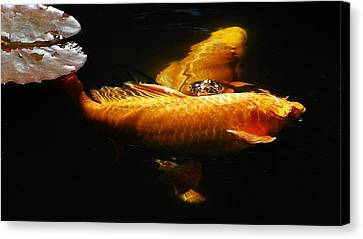 Koi Crossing Canvas Print by Don Mann