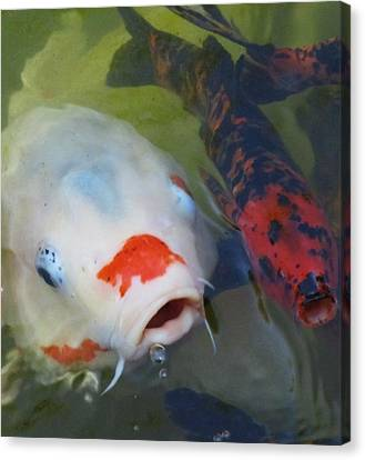 Koi Fish #1 Canvas Print by Todd Sherlock