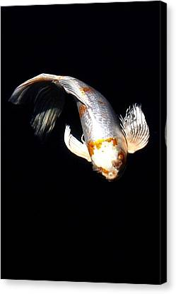 Koi From Above Canvas Print by Don Mann
