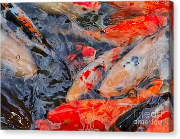 Koi Pond II Canvas Print by Louise Heusinkveld