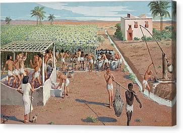 Laborers Harvest Grapes And Press Canvas Print by H.M. Herget