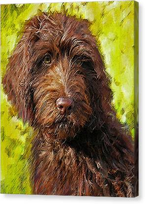 Labradoodle Canvas Print by Jane Schnetlage