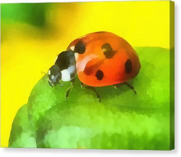 Ladybird Canvas Print by Odon Czintos