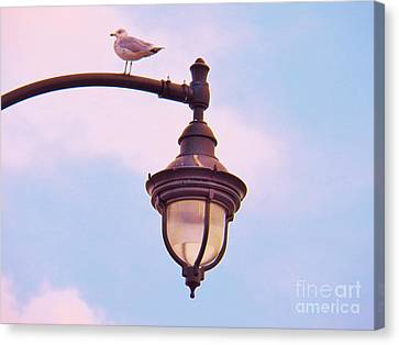 Lampost Gull   Two Canvas Print by Judy Via-Wolff