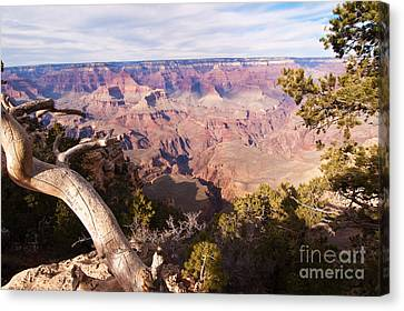 Late Afternoon At The South Rim Canvas Print by Bob and Nancy Kendrick