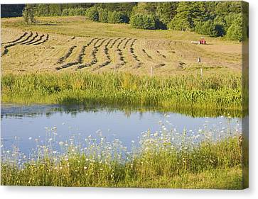Late Summer Hay Being Harvested In Maine Canvas Poster Print Canvas Print by Keith Webber Jr