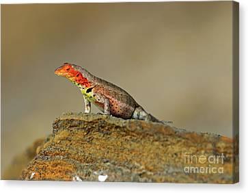 Lava Lizard Canvas Print by Sami Sarkis