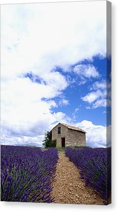 Lavender Fields Canvas Print by Axiom Photographic