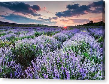 Lavender Sea Canvas Print by Evgeni Dinev