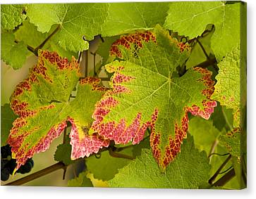 Leaf Design Canvas Print by Jean Noren