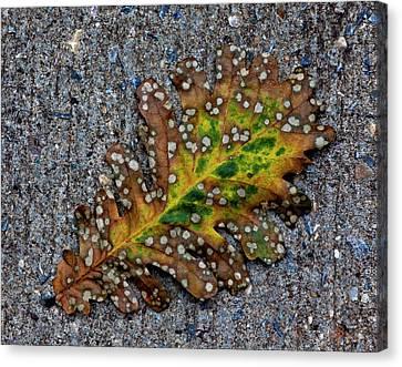 Leaf On The Sidewalk Canvas Print by Robert Ullmann