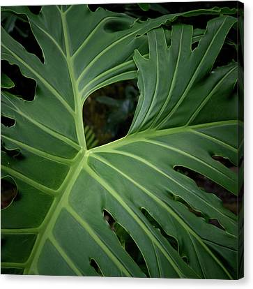 Leaf With Empty Space Canvas Print by David Coblitz