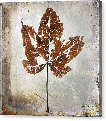 Leaf  With Textured Effect Canvas Print by Bernard Jaubert