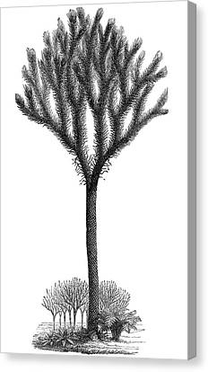 Lepidodendron Plant, 19th Century Artwork Canvas Print by