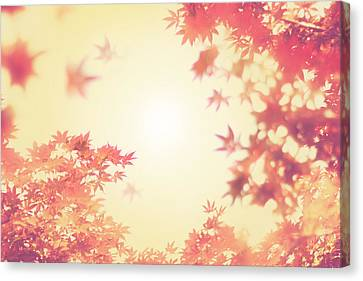Let It Fall Canvas Print by Amy Tyler