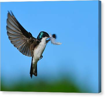 Light As A Feather Canvas Print by Tony Beck