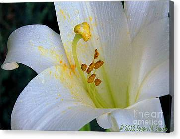 Light White Canvas Print by Susan Smith