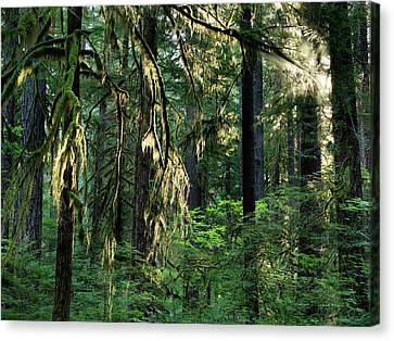 Lighting The Forest Canvas Print by Leland D Howard