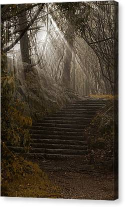 Lighting The Path Canvas Print by Andrew Soundarajan