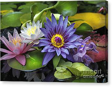 Lilies No. 16 Canvas Print by Anne Klar