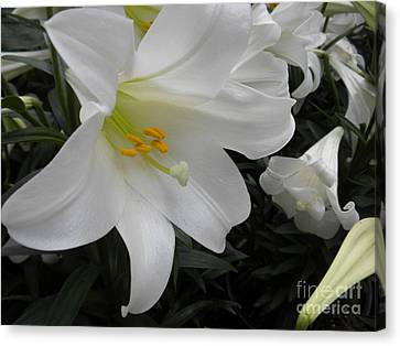 Lilies Canvas Print by Silvie Kendall