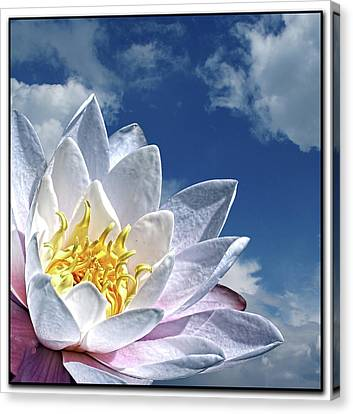 Lily Flower Against Sky Canvas Print by Photo by Daveduke.