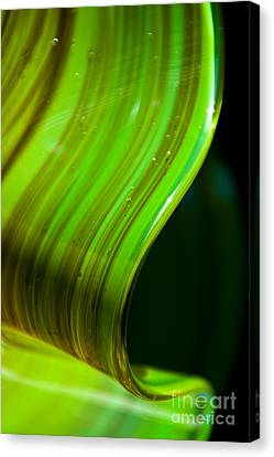 Lime Curl Canvas Print by Dana Kern