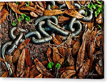 Links And Leaves Canvas Print by Christopher Holmes